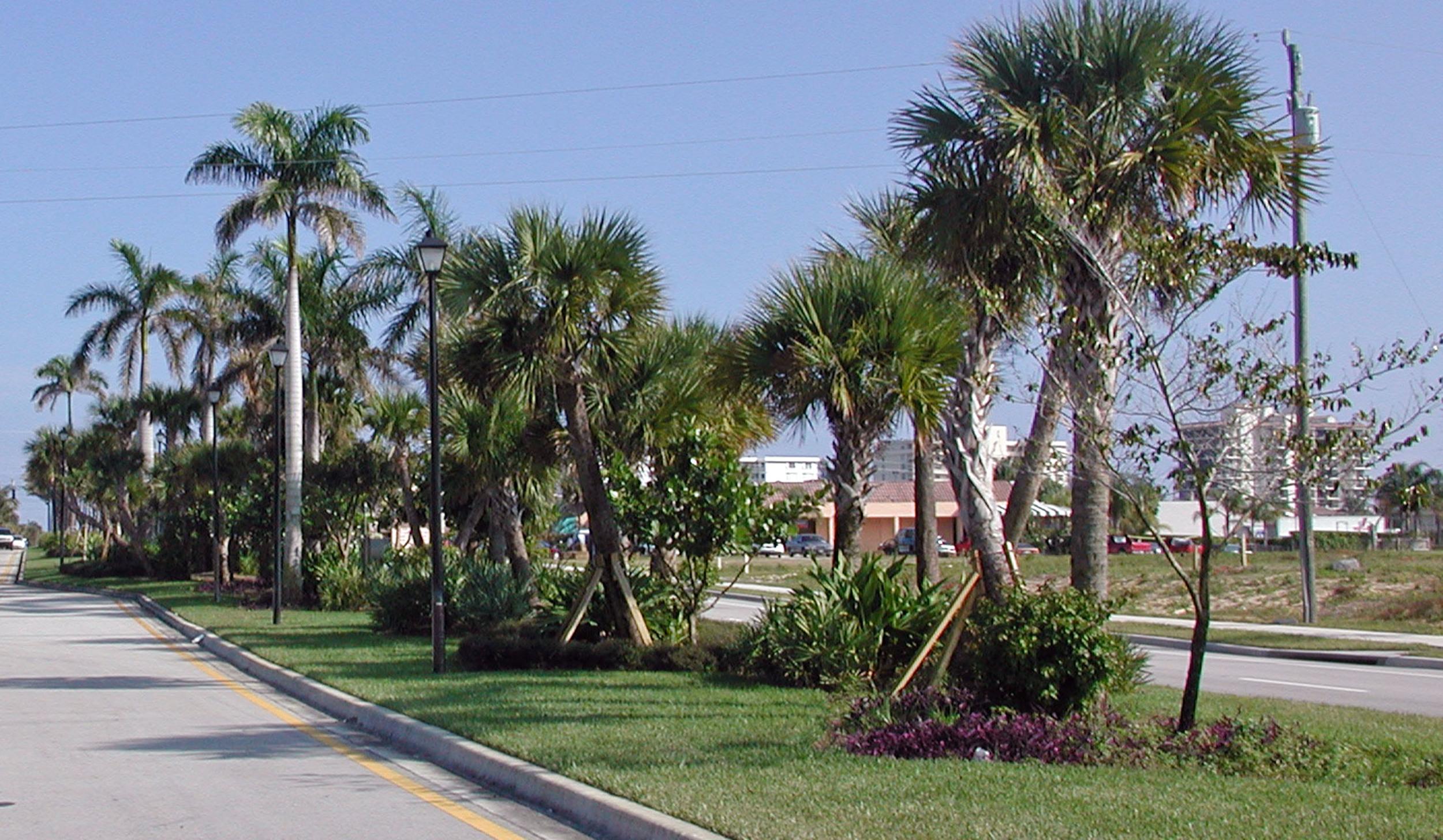 Donald Ross Road Palm Beach County Florida Landscape Sabal Plams.jpg