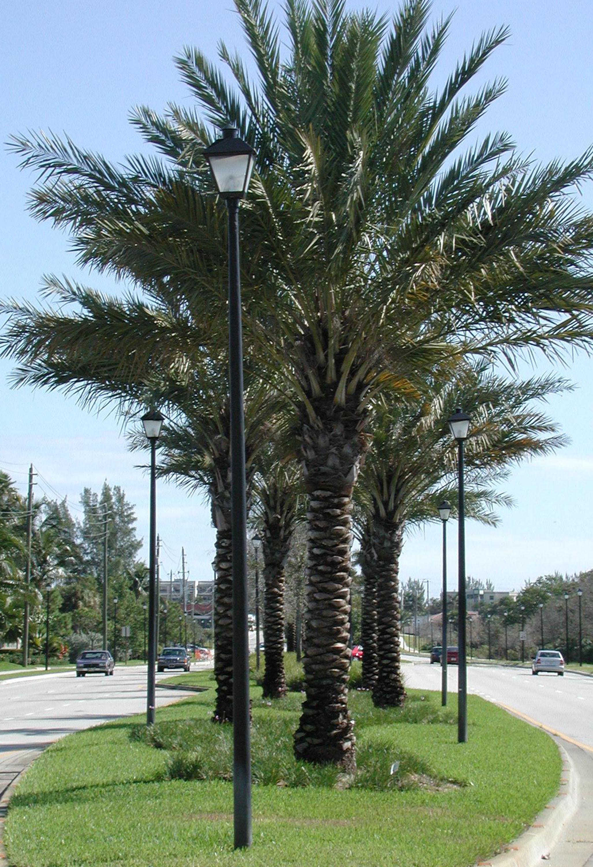 Donald Ross Road Palm Beach County Florida Landscape Formal Plantings.jpg