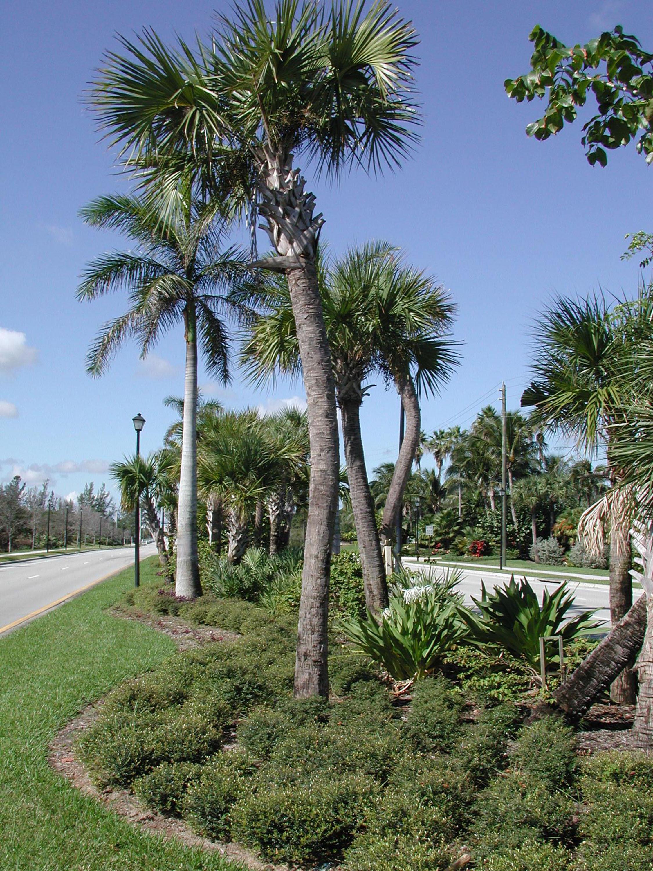Donald Ross Road Palm Beach County Florida Landscape Native Plantings.jpg
