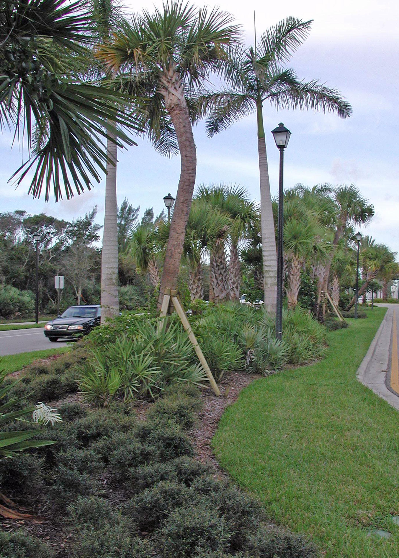 Donald Ross Road Palm Beach County Florida Landscape Plantings.jpg