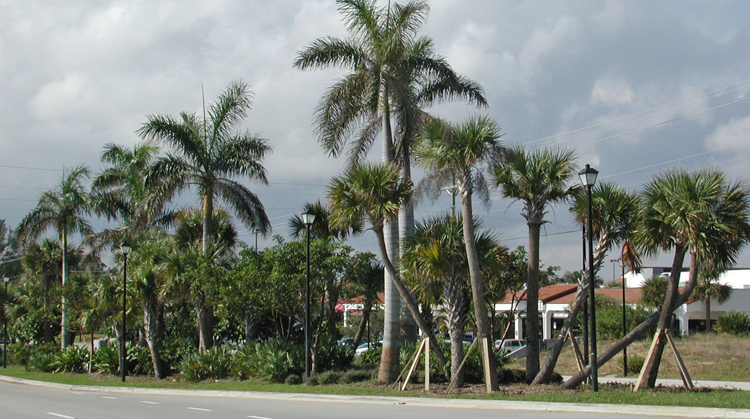 Donald Ross Road Palm Beach County Florida Landscape Roadway.jpg