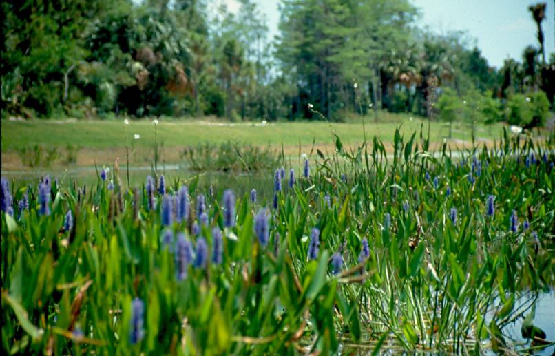 Dyer Landfill Reclamation Palm Beach County Florida Wetlands.jpg