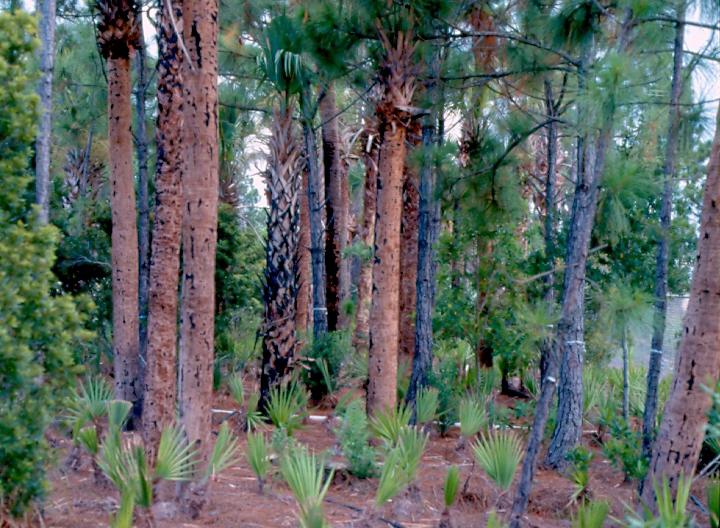 Dyer Landfill Reclamation Palm Beach County Florida Regenerated Landscape.jpg