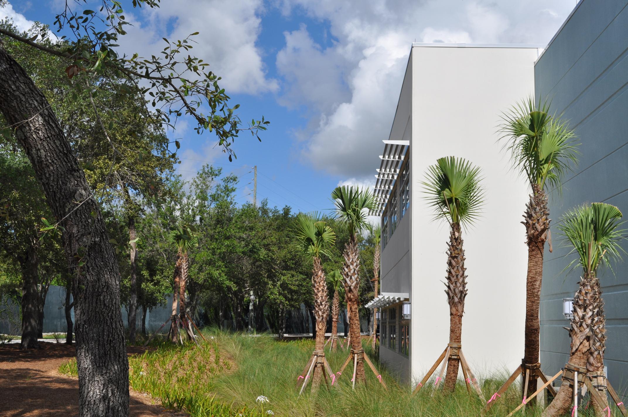 Harbor Branch Oceanographic Institute at FAU Research Laboratory II Bio Swale Native Florida Grasses.JPG