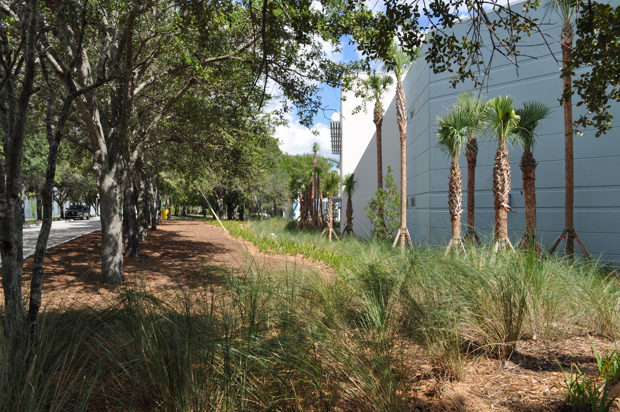 Harbor Branch Oceanographic Institute at FAU Research Laboratory II Bio Swale Native Plantings.JPG