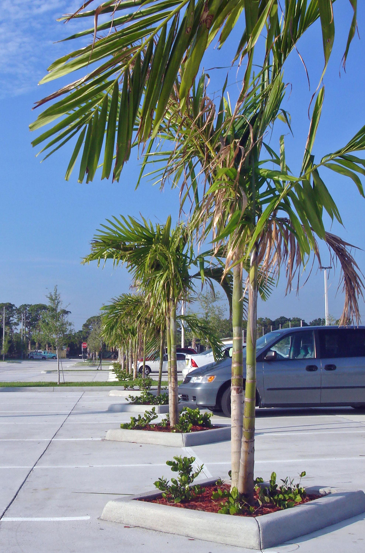 Jupiter Christian School Jupiter Florida Tree Islands.JPG