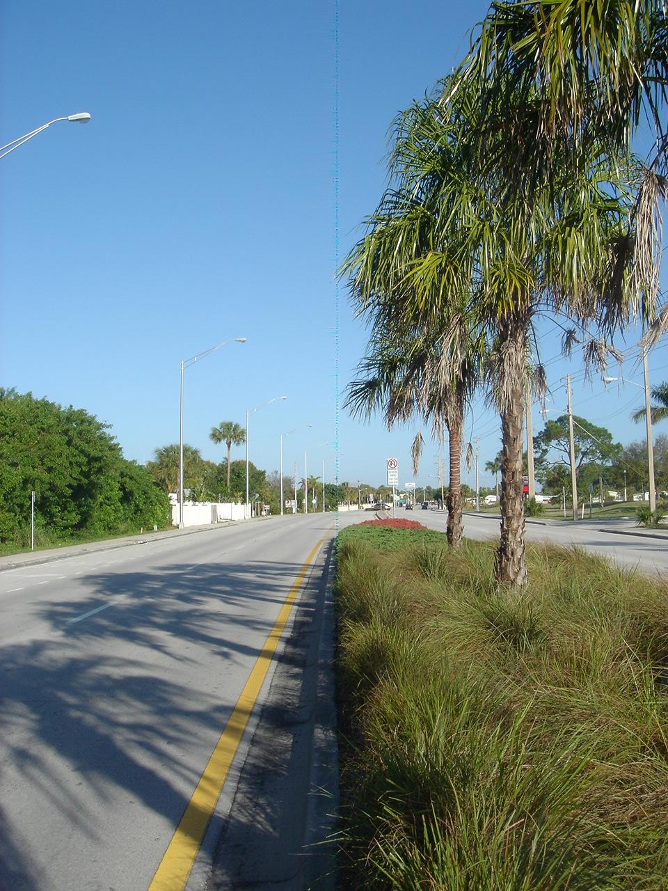 Kanner Highway Stuart Florida FDOT Native Plantings Thatch Palms.JPG