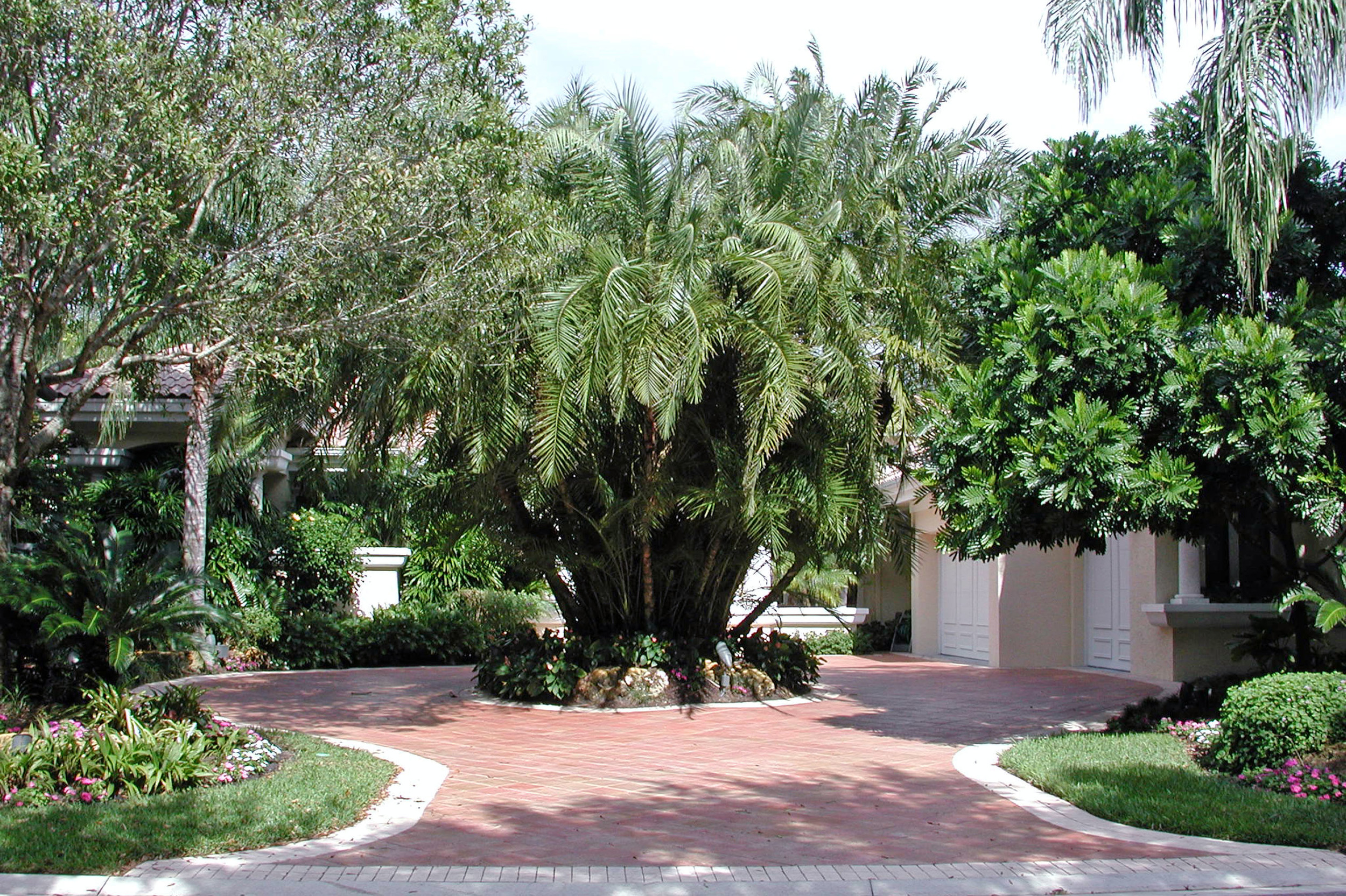 Admirals Cove Residence Paver Entry Reclinata Palm.jpg