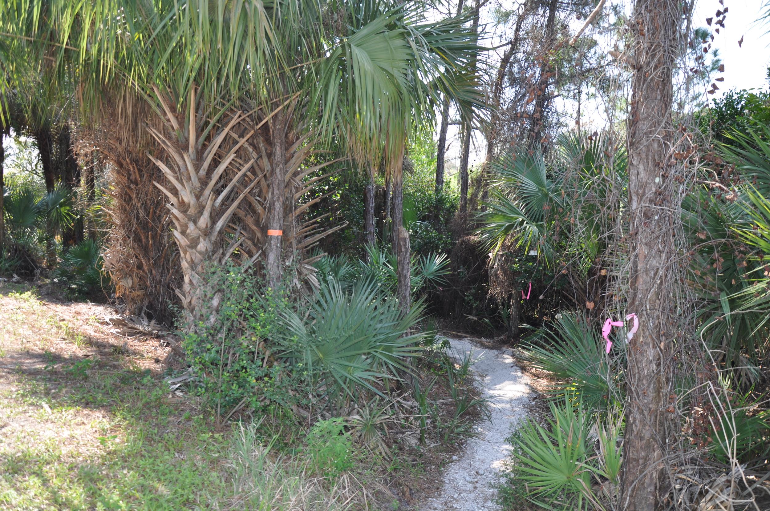 Dyer Landfill Reclamation Palm Beach County Florida Mountain Bike Trail.JPG