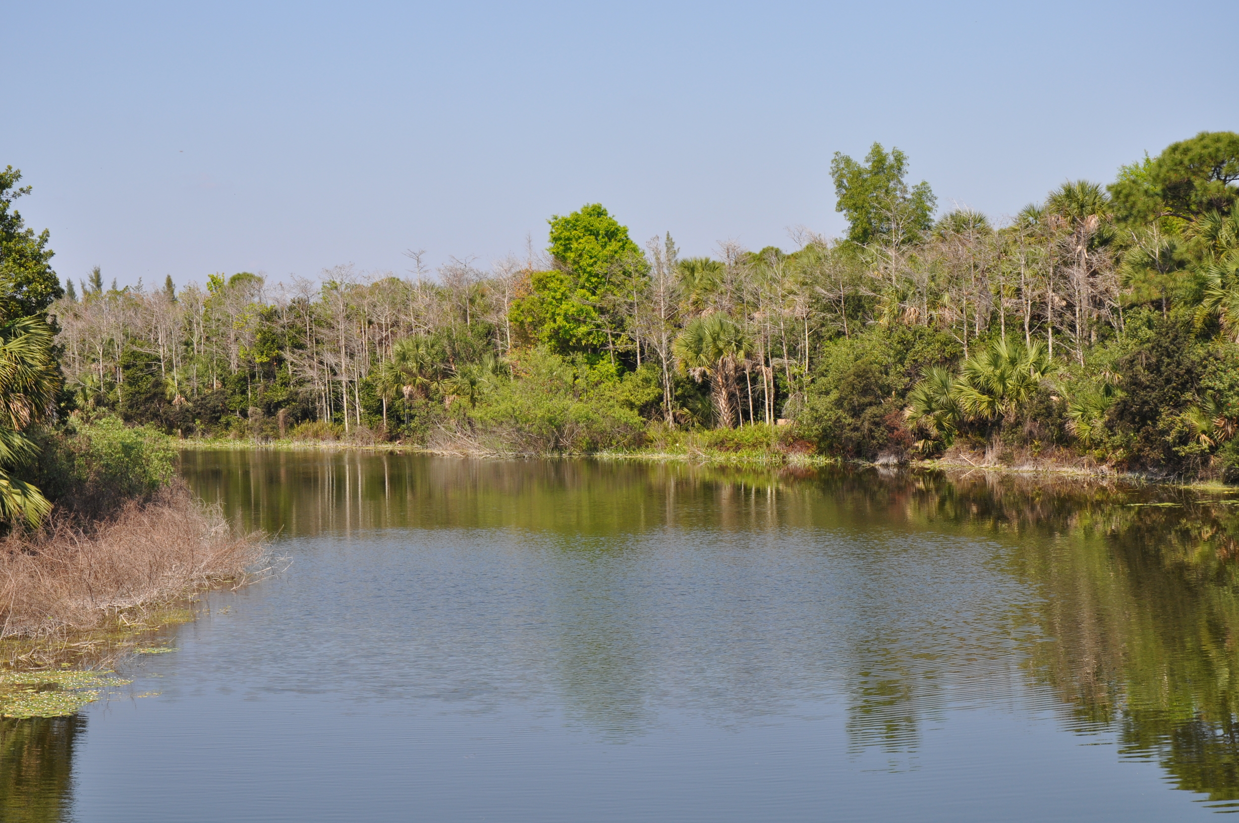 Dyer Landfill Reclamation Palm Beach County Florida Restored Natural Area.JPG