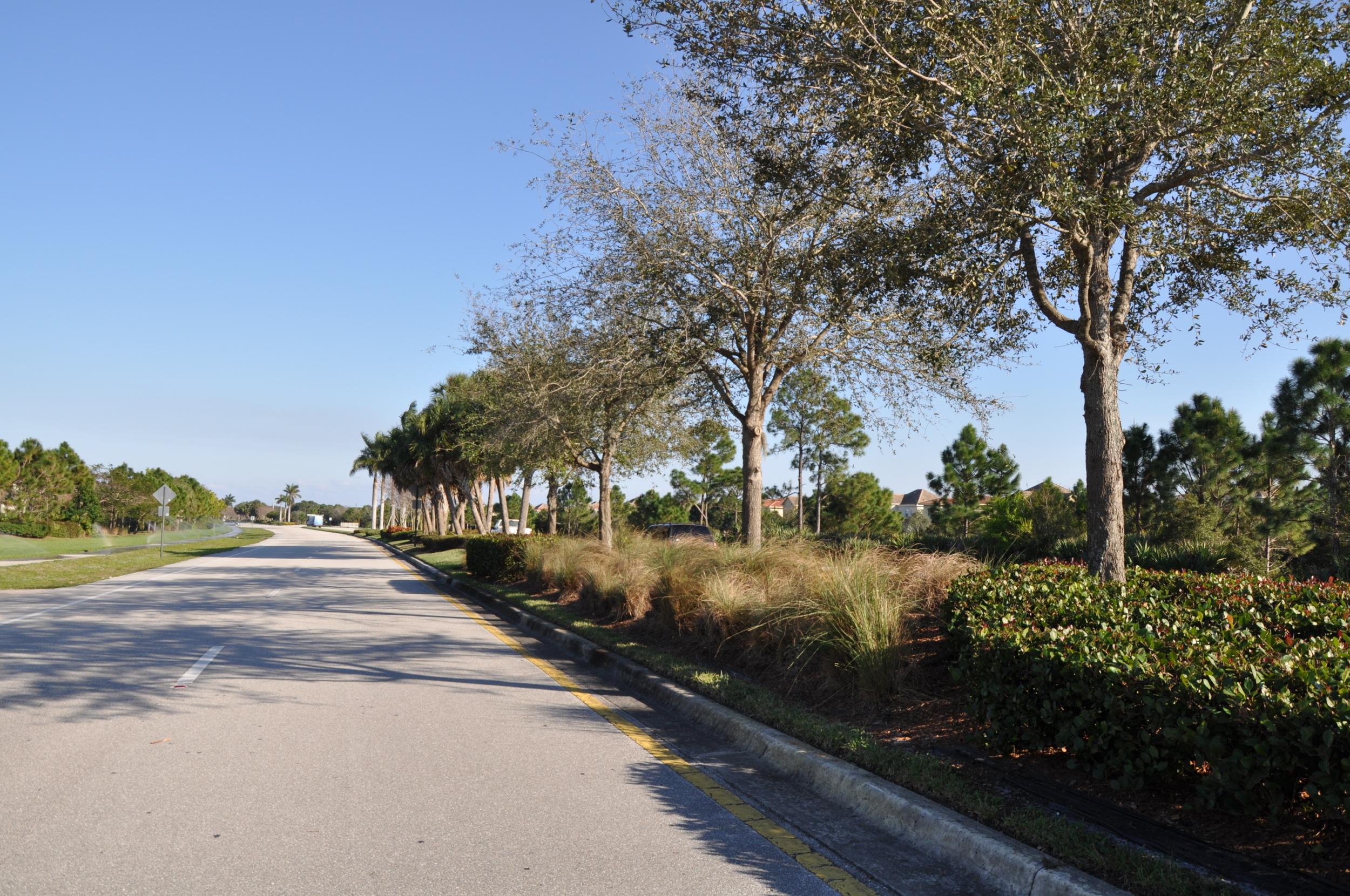 Indian Creek Parkway Jupiter Florida Native Landscape Plantings.JPG
