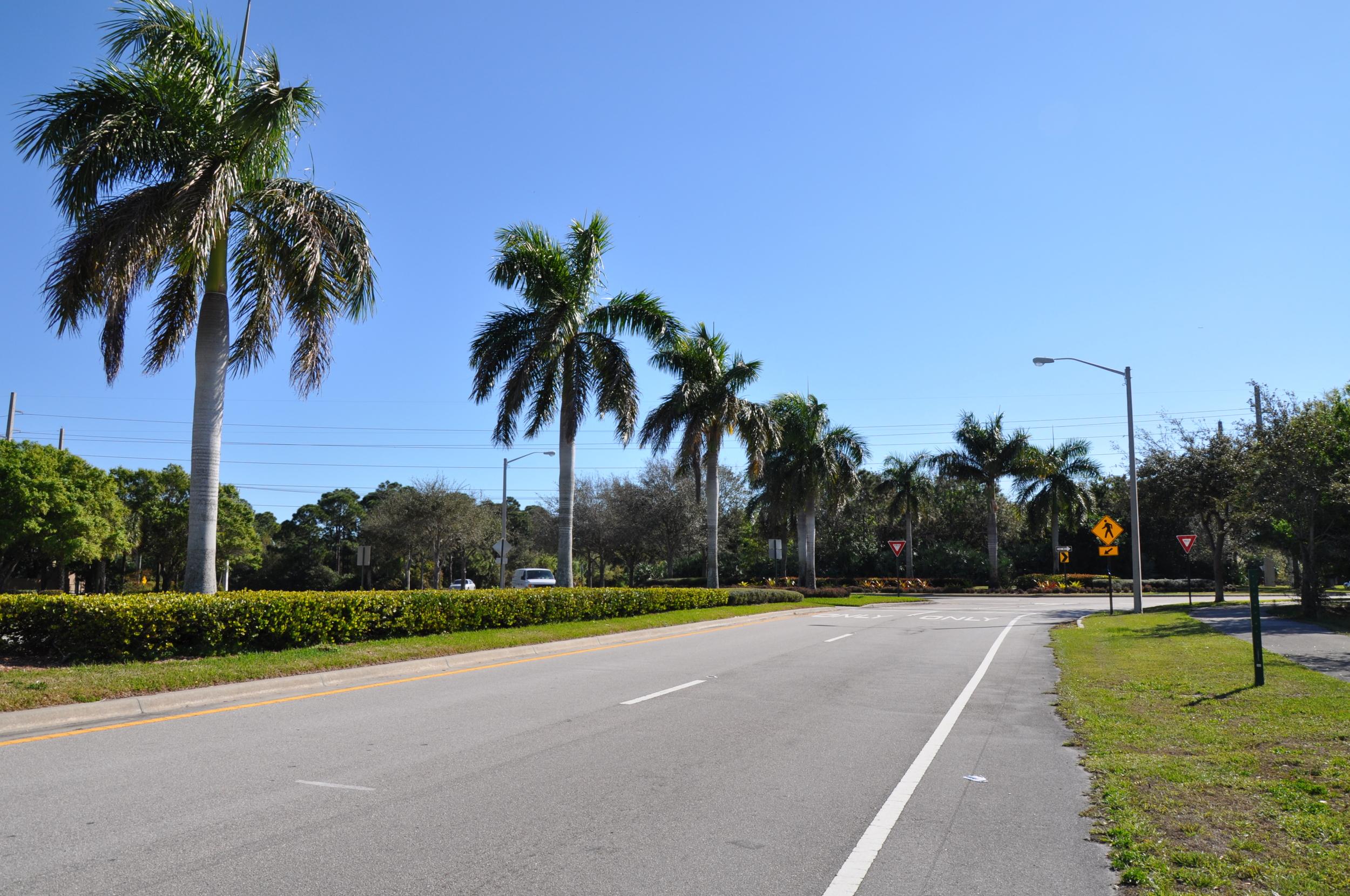 Indian Creek Parkway Jupiter Florida Royal Palms.JPG