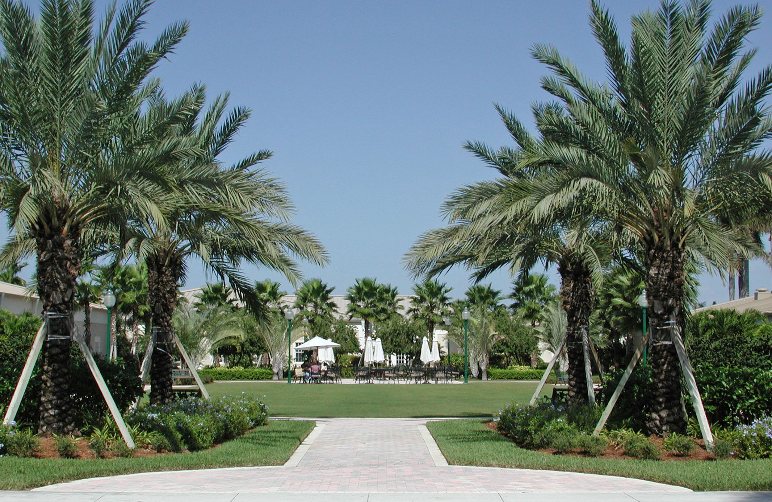 Open Lawn and Date Palms at Christ Fellowship Church Landscaping PBG.jpg