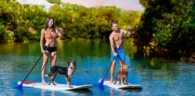 Puppy paddleboarding this Friday at Harbourside Place. (Courtesy Harbourside Place.