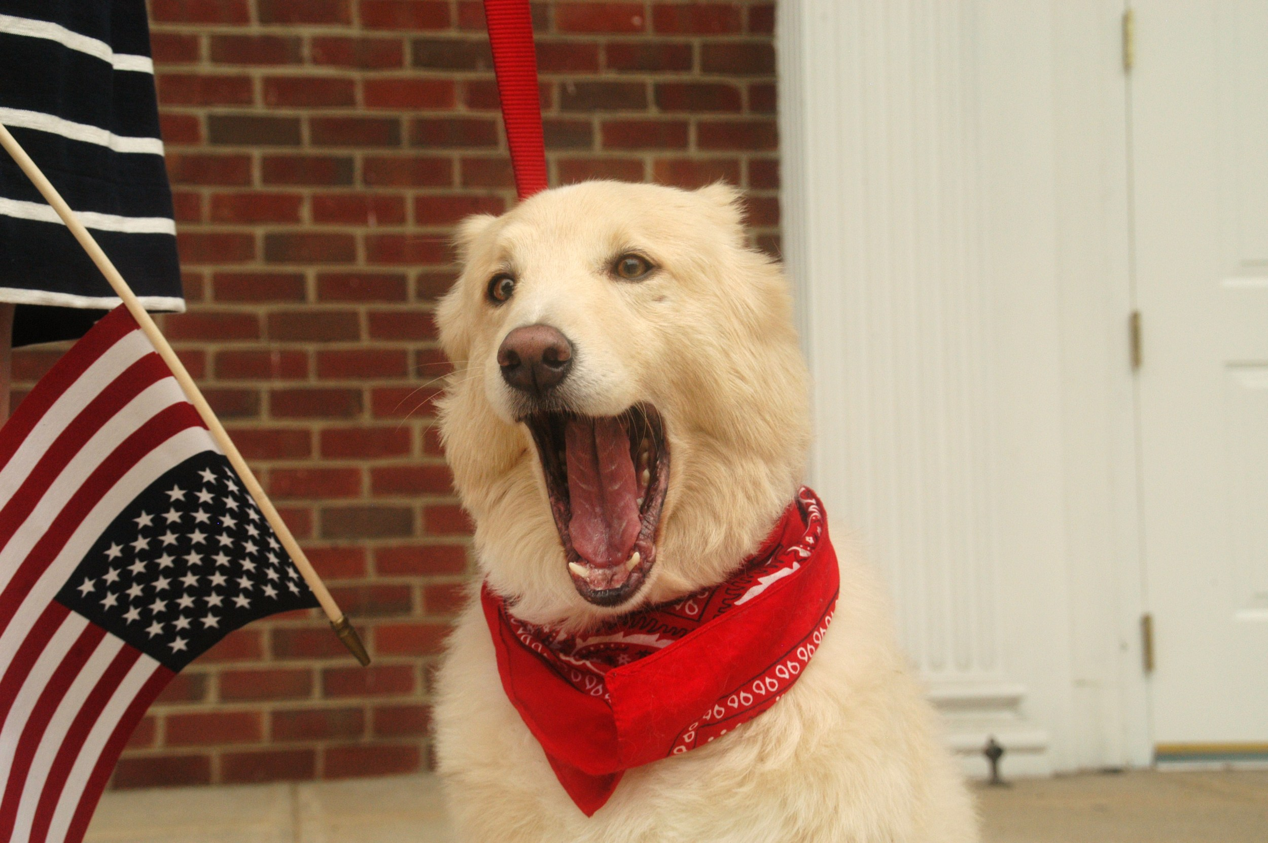 """Phoebe's singing the Star Spangled Banner! """"Oh say can you see? Byyyyyyyyyyyyy the dawn's early light."""""""