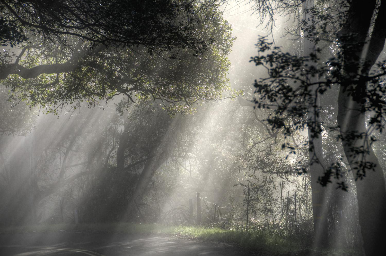 Napa Valley Sun Rays