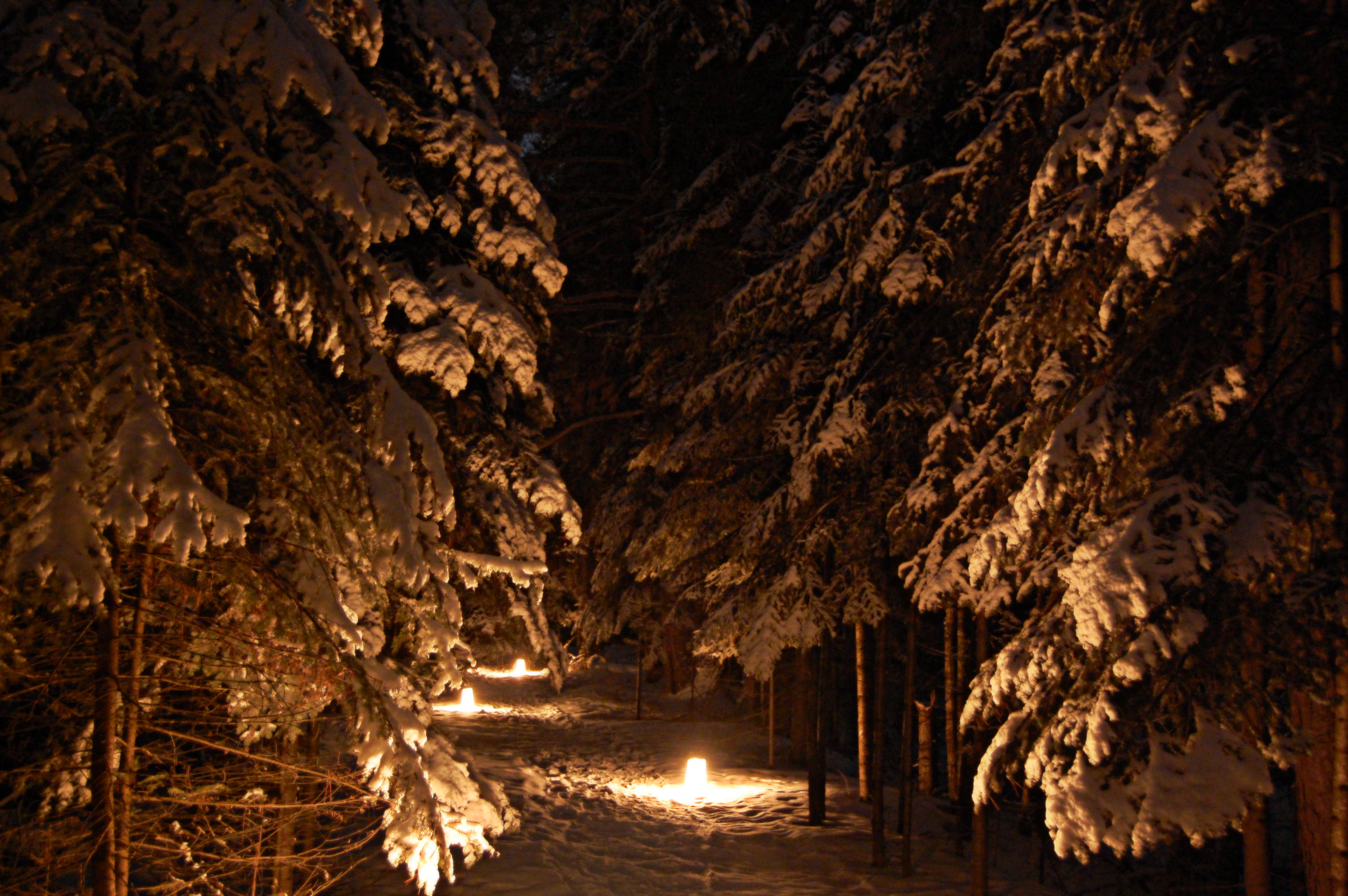 A path lit by candles at night.
