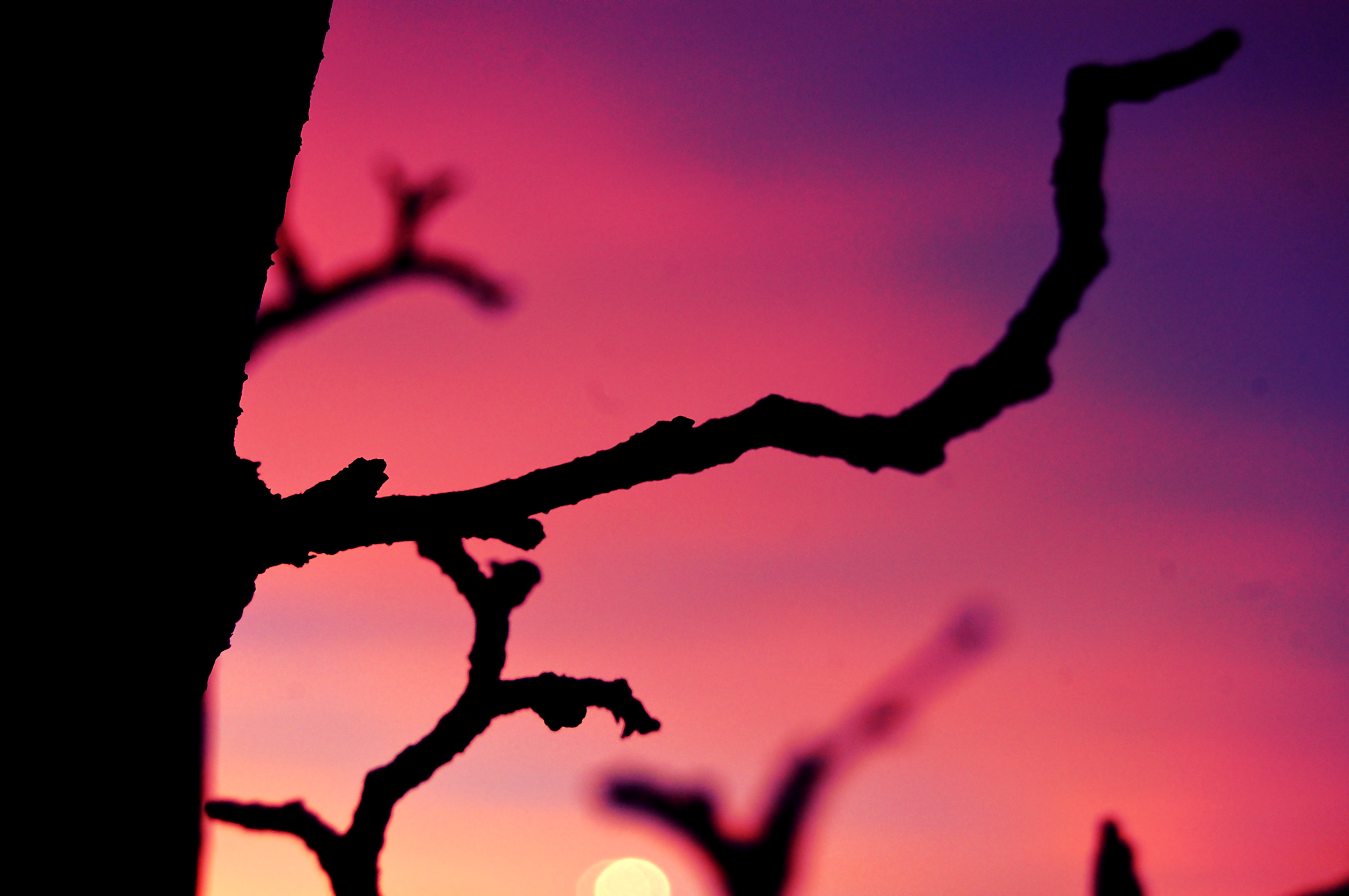 A crooked branch against the sky.