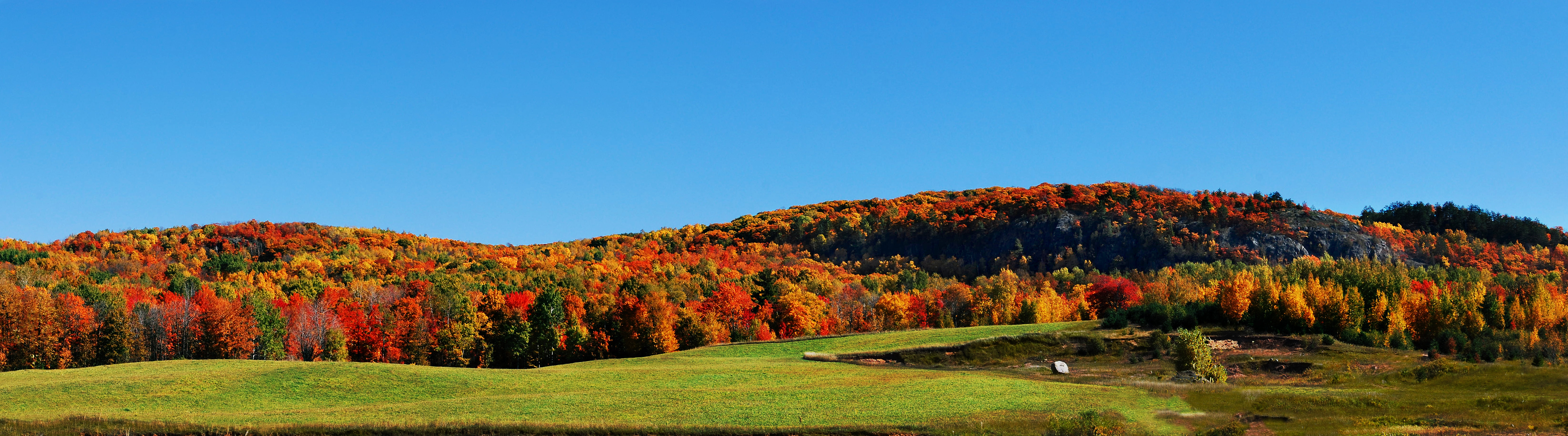 A panorama of a fall hillside with brilliant trees covering it.