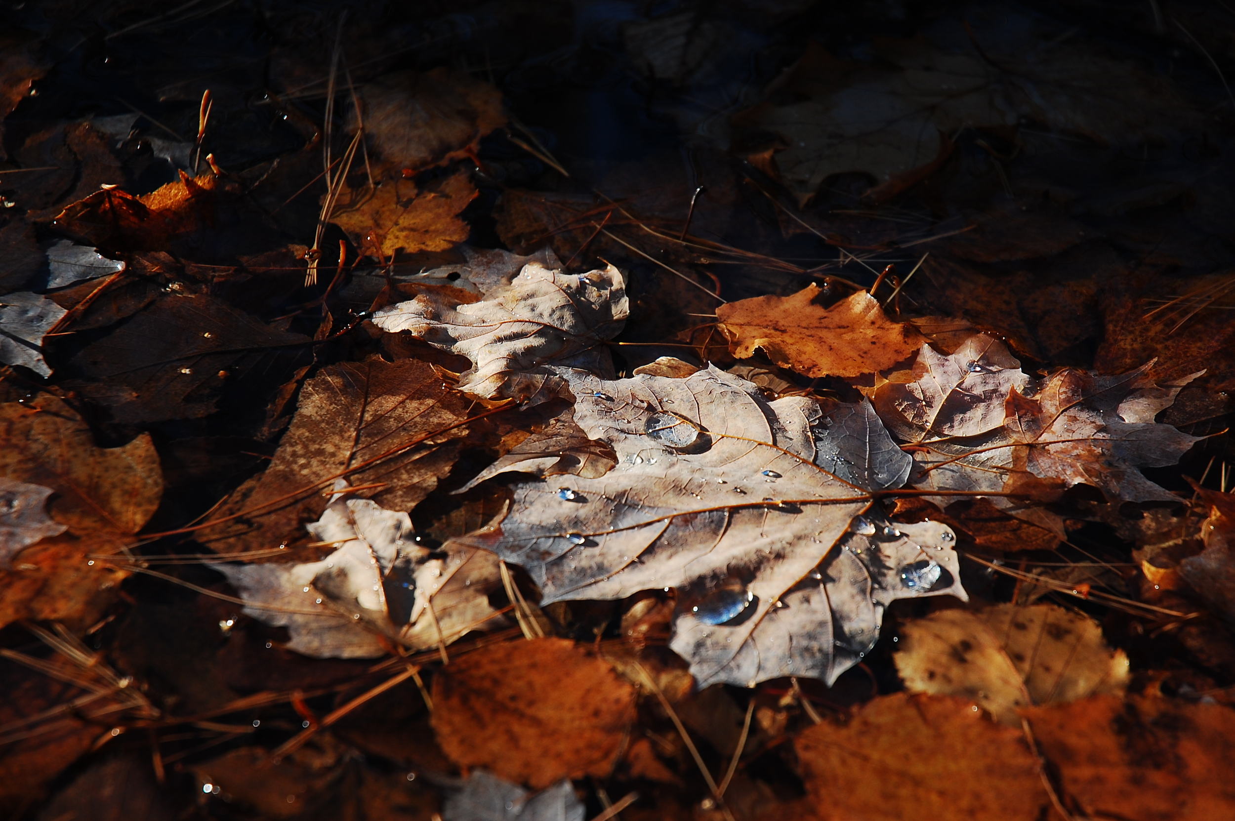 Fall leaves with water.