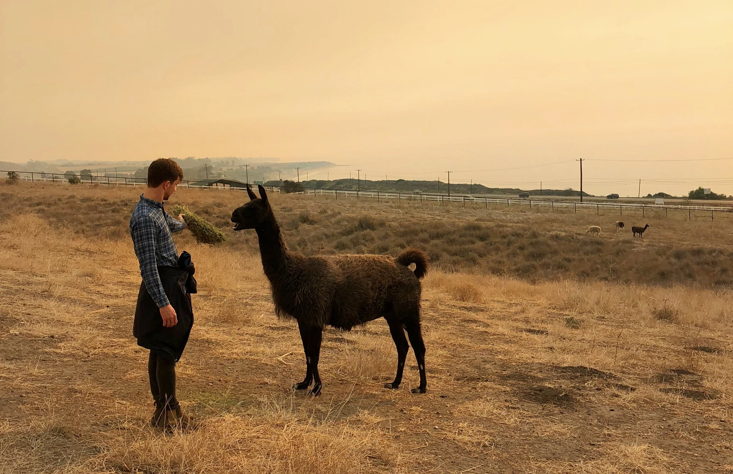 December, 2017: Feeding a llama in Santa Barbara, CA.