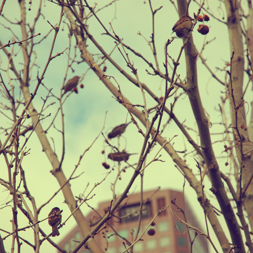 august-03_sparrows_500px.jpg