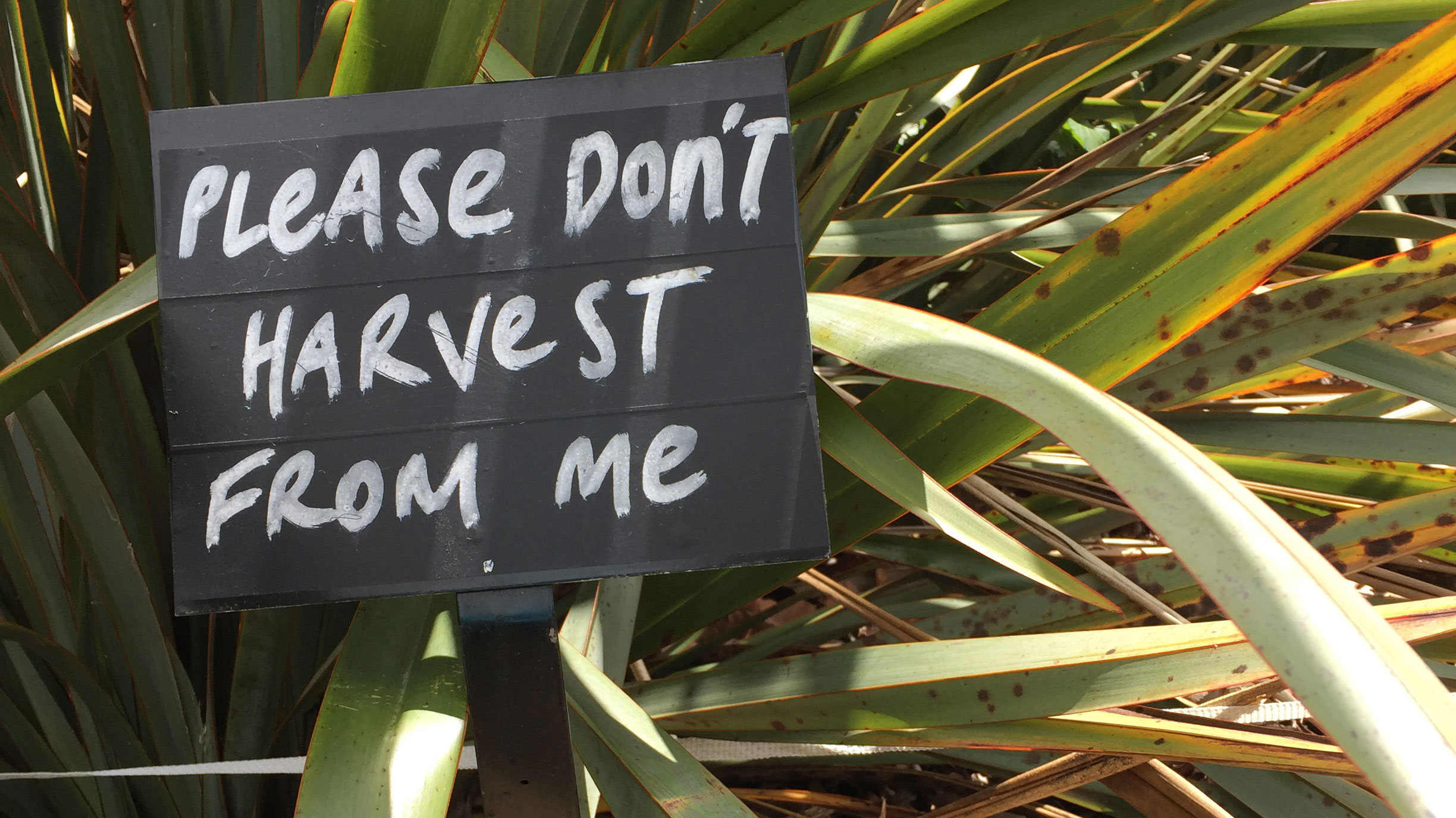 The Auckland Botanical Gardens have lots of signs and this one asked people not to cut the harakeke (flax) and I felt the same way.