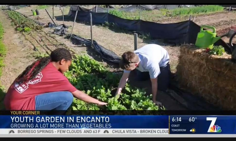 NBC 7 Youth Garden News Story