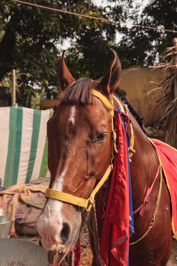 20111112_sonepur_0670.jpg
