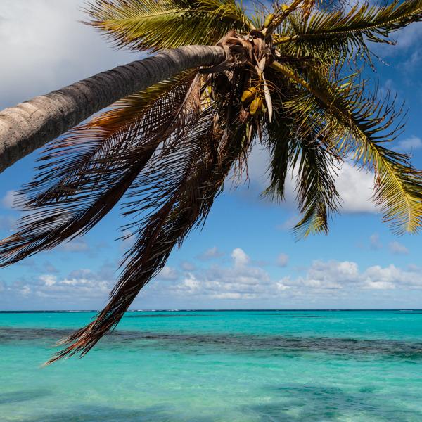 anguilla2.jpg