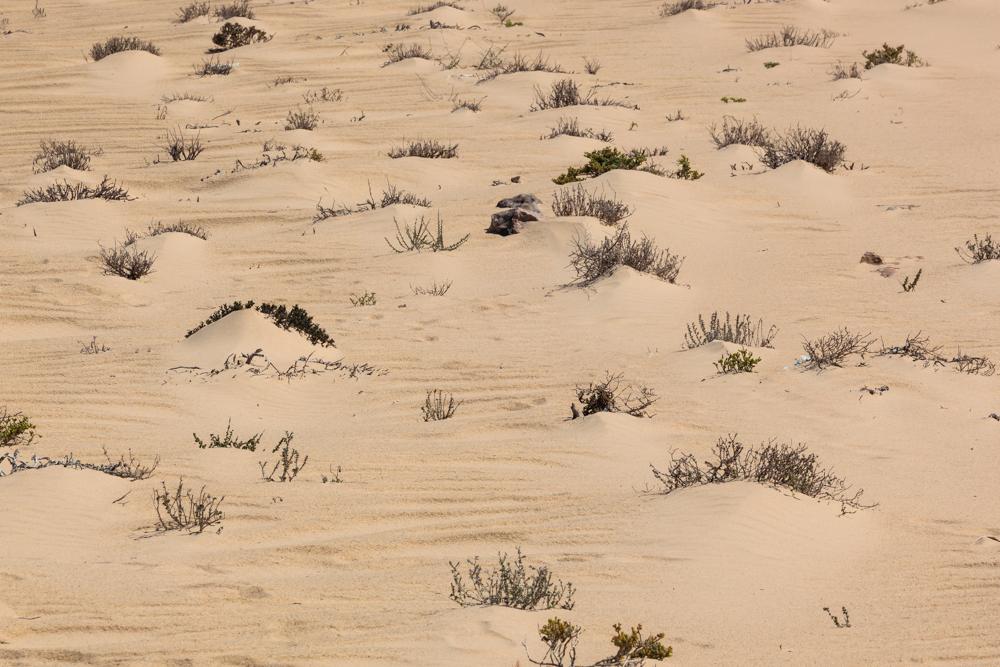 20120424_western_sahara_01967.jpg