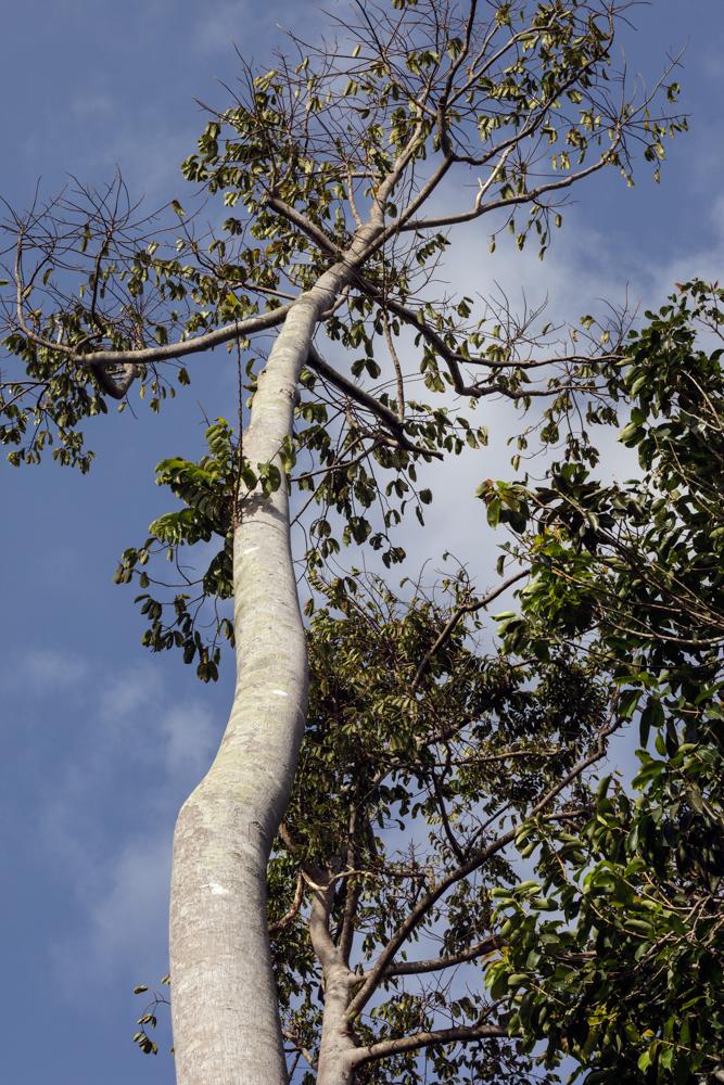 20120308_pemba_island_0160-338.jpg