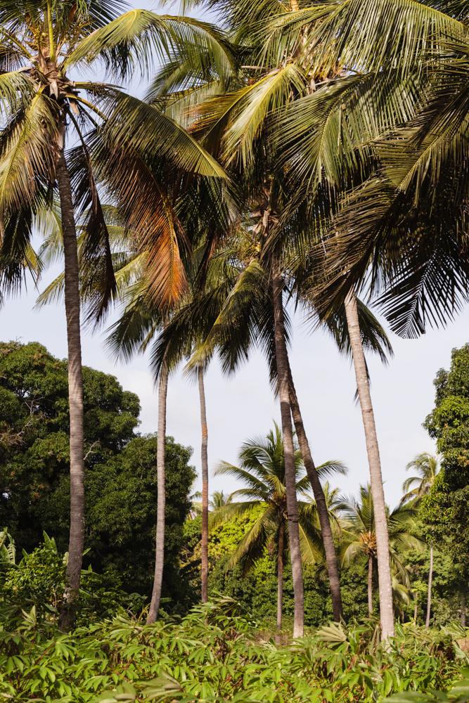 20120308_pemba_island_0199.jpg