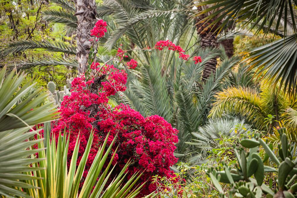 20120427_jardin_majorelle_0024.jpg