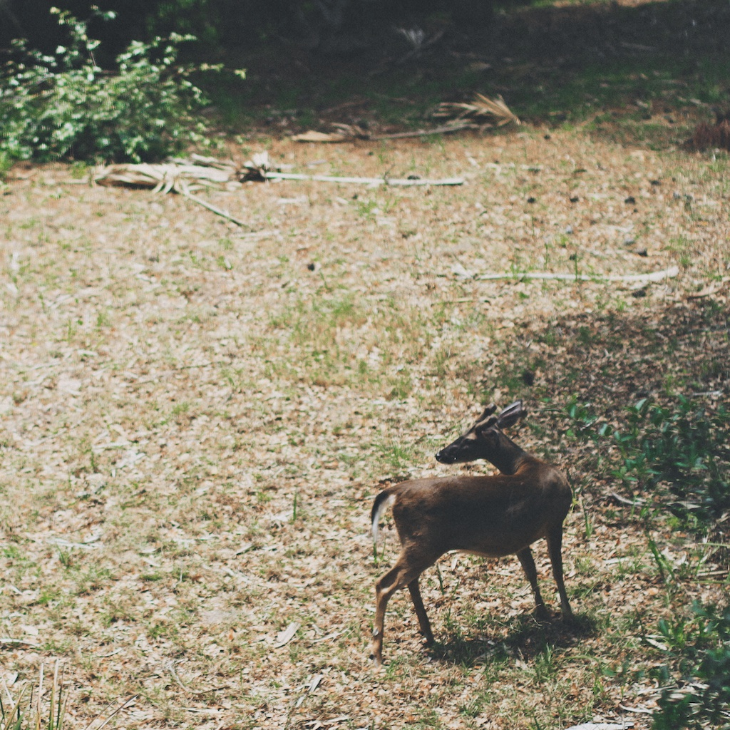 velvet stubbs's brother deer