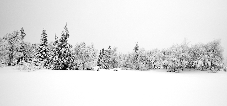 winter_wonderland.jpg