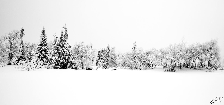 Hvitt landskap I