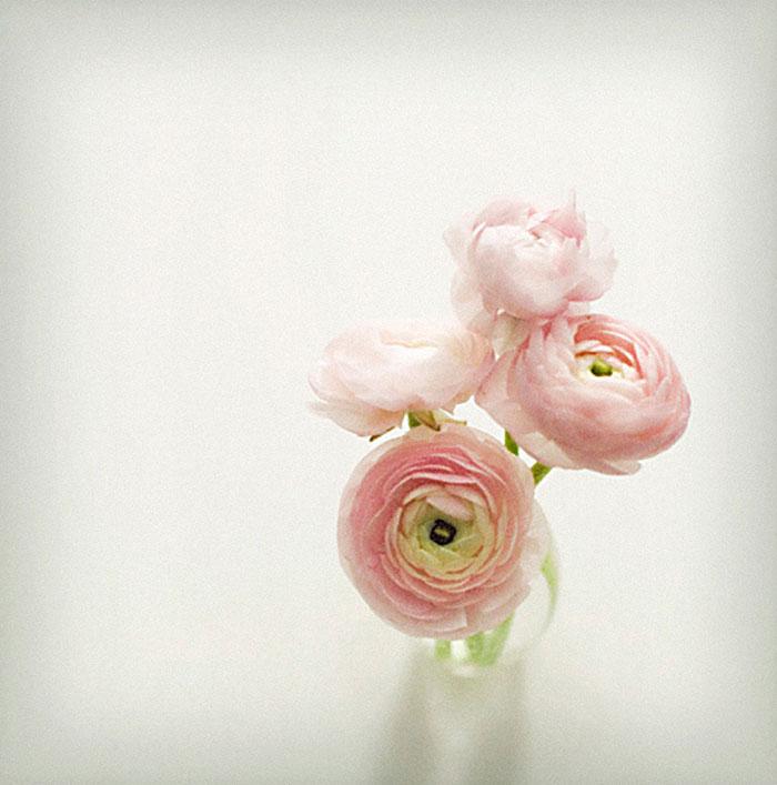pink-curlys.jpg
