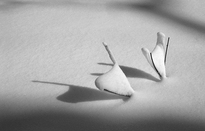 snow-zen-3.jpg