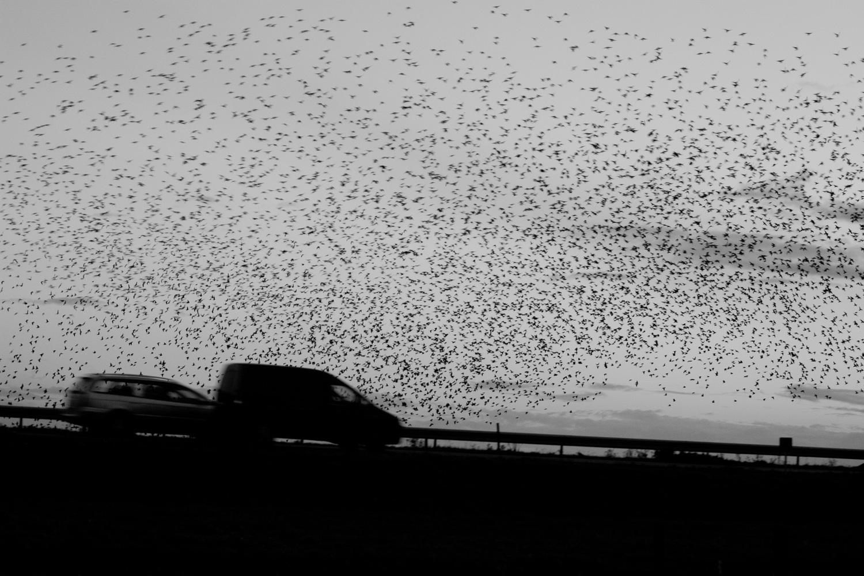 Trekking Birds