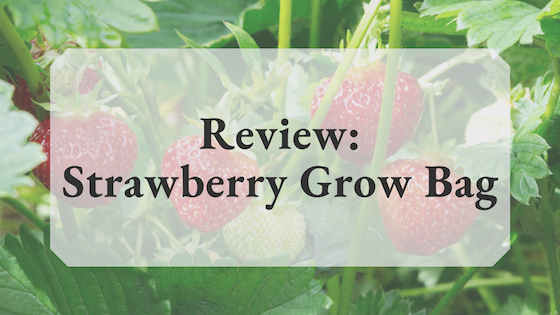 Banner_StrawberryGrowBag_Review.png
