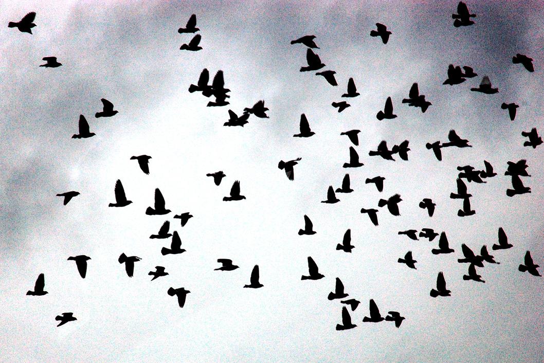 burst-of-birds.jpg