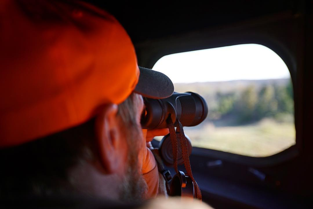 Vet hunting.jpg