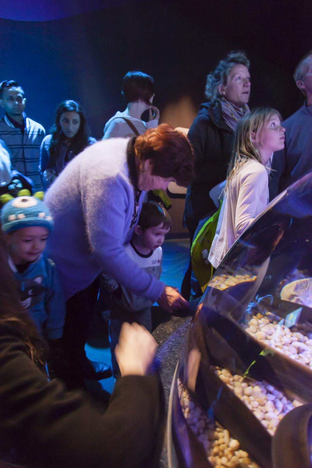 aquarium-003.jpg