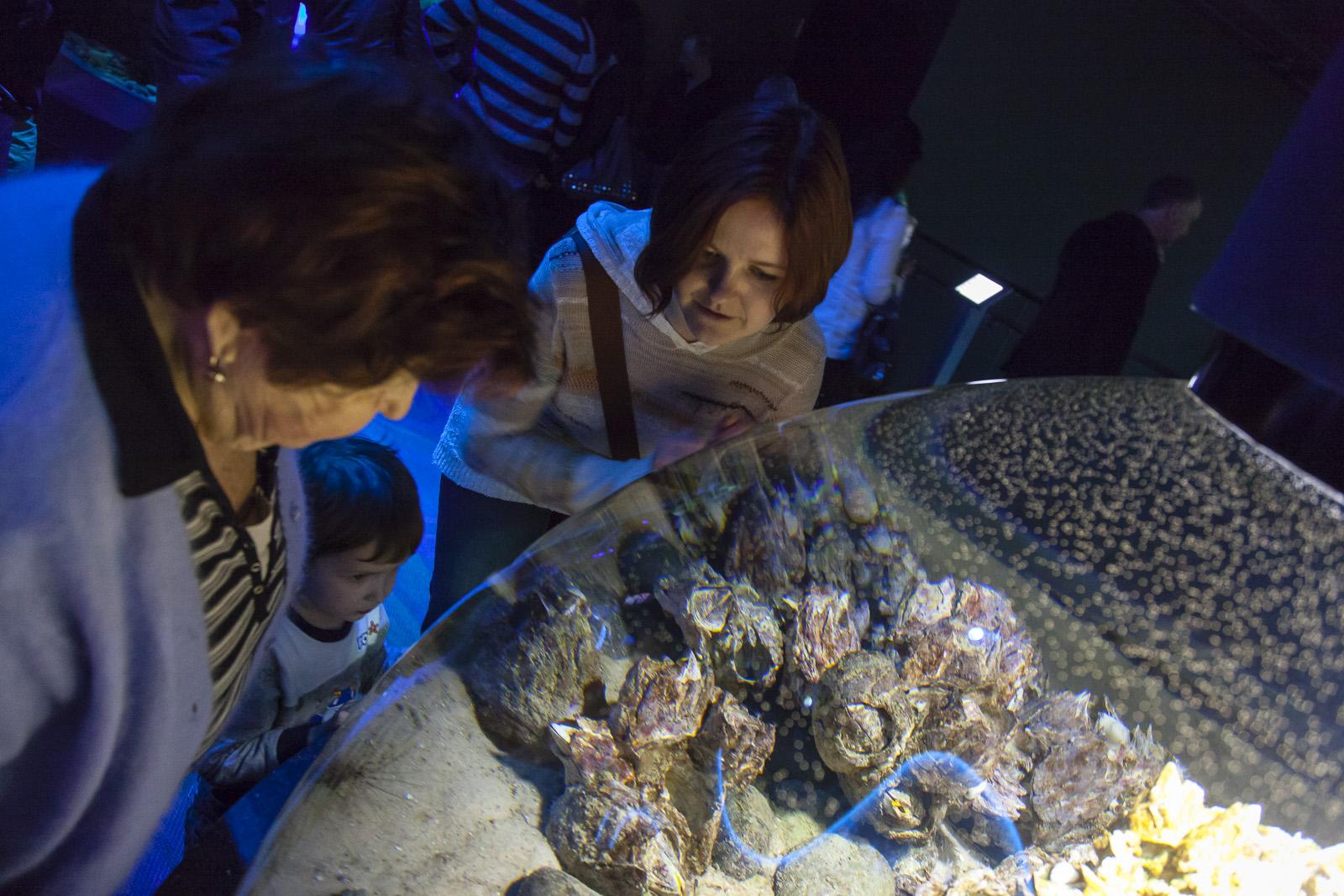 aquarium-004.jpg