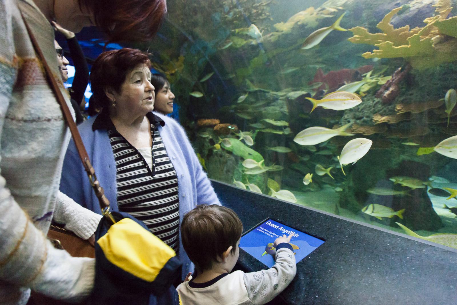 aquarium-006.jpg