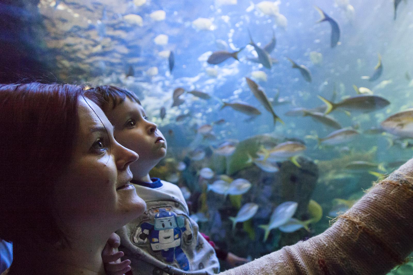 aquarium-007.jpg