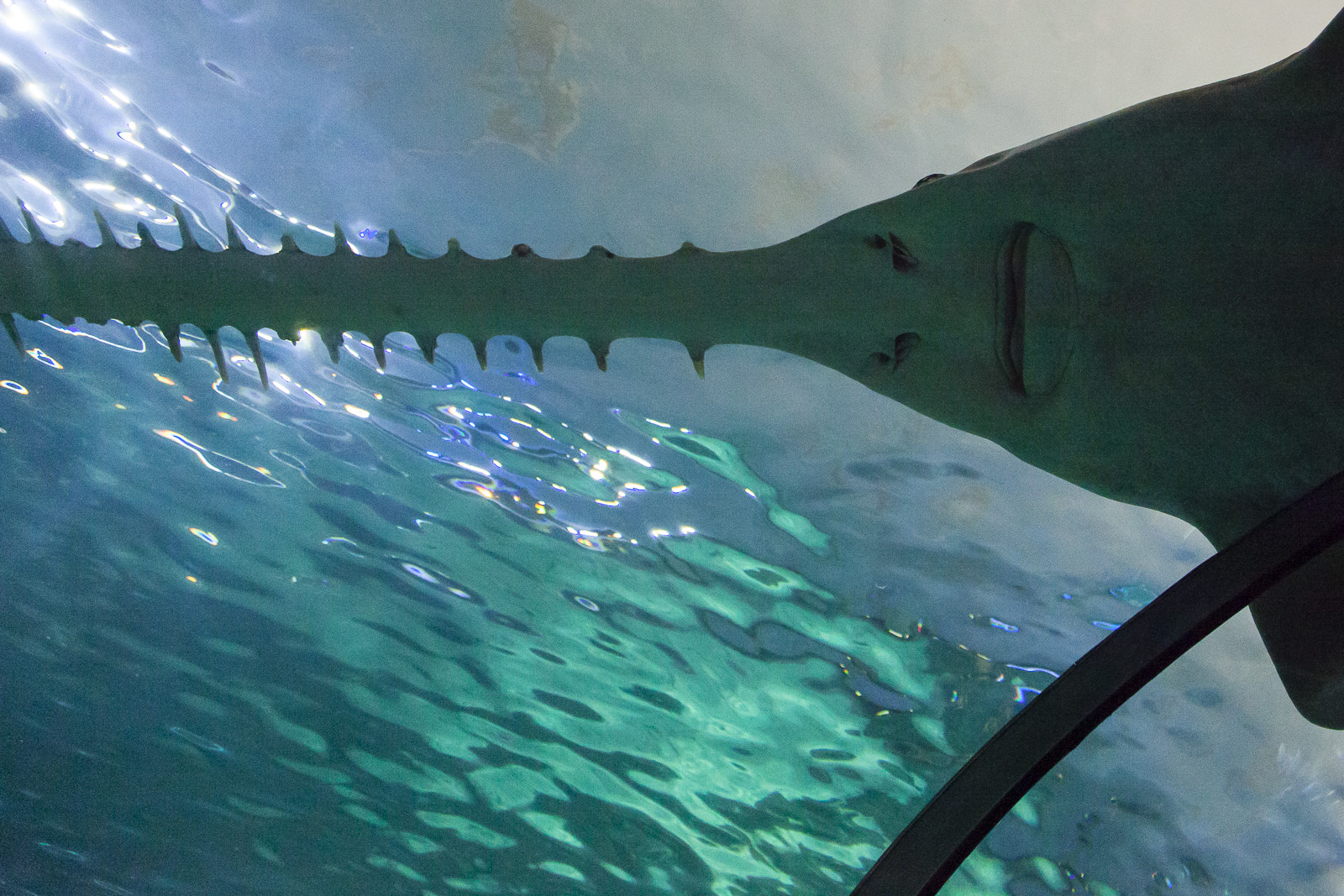 aquarium-011.jpg