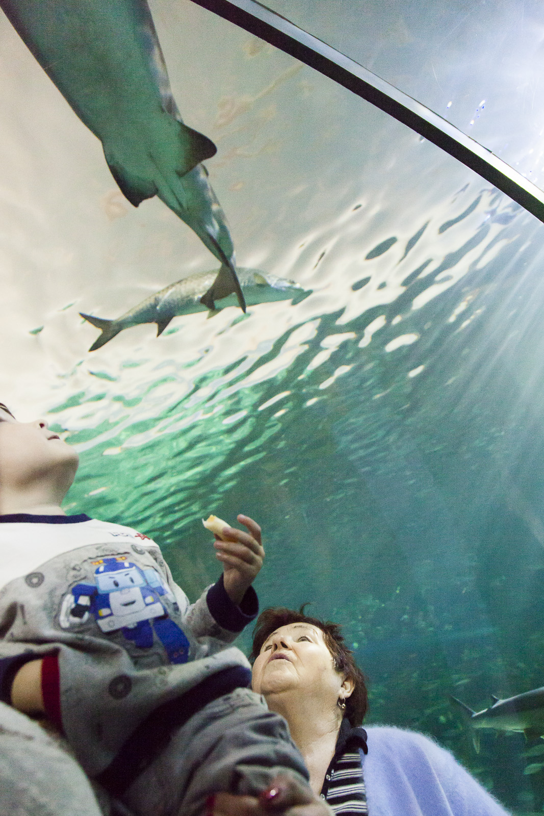 aquarium-014.jpg