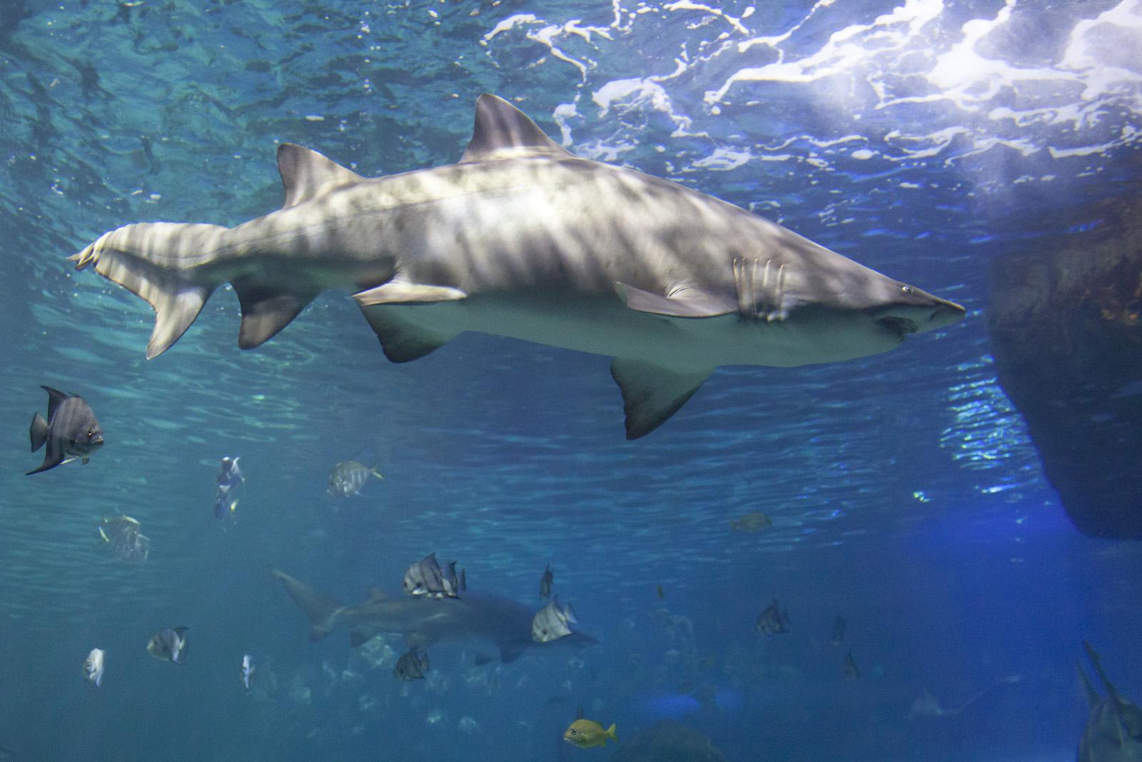aquarium-015.jpg